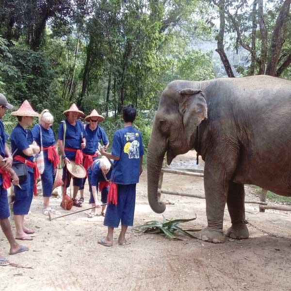 phuket-phang-nga-full-day-learning-elephant-care-5