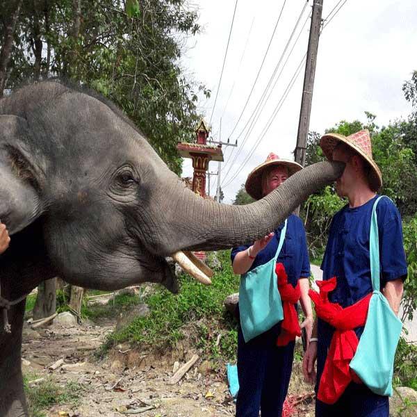 phuket-phang-nga-full-day-learning-elephant-care-8