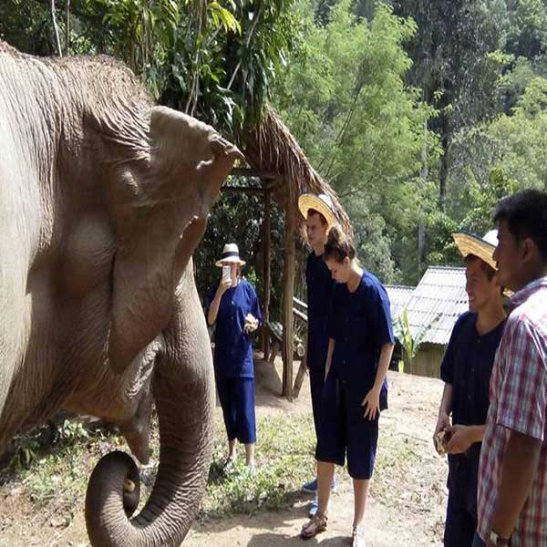 edc-1-full-day-elephant-care-sanctuary-nature-park-mae-taeng-river-chiang-mai-thailand-tours-2