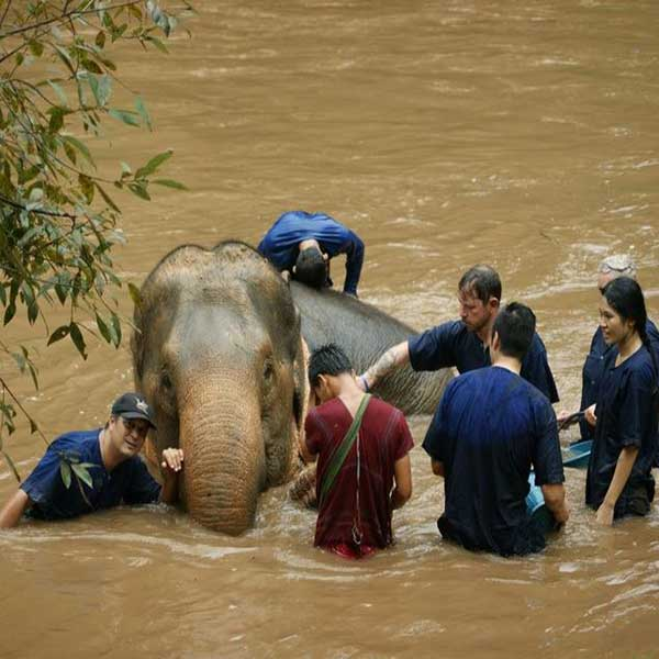 wwr-1-full-day-white-water-rafting-mae-taeng-elephant-care-river-chiang-mai-thailand-tours-2