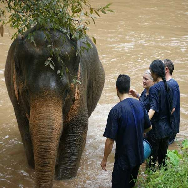 wwr-1-full-day-white-water-rafting-mae-taeng-elephant-care-river-chiang-mai-thailand-tours-3