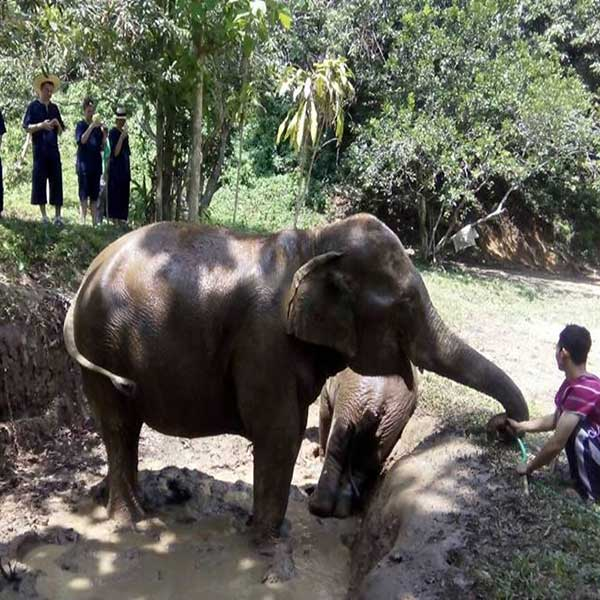 wwr-1-full-day-white-water-rafting-mae-taeng-elephant-care-river-chiang-mai-thailand-tours