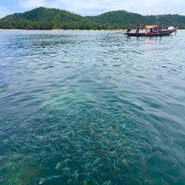 day-trip-koh-tan-koh-mudsum-sightseeing-snorkeling-at-koh-samui-8