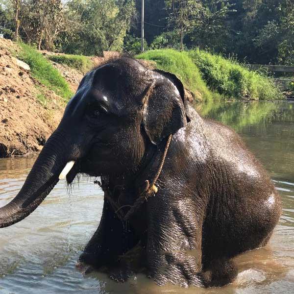 one-day-trip-family-adventure-the-nature-safari-tour-chiang-mai-thailand-2