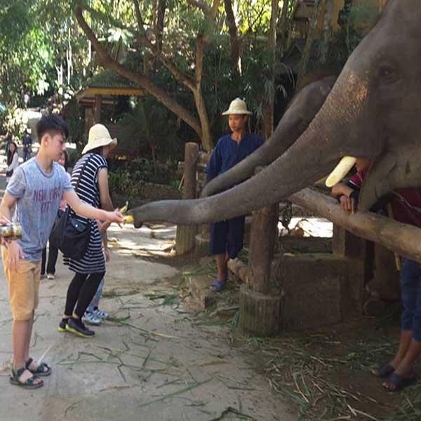 one-day-trip-family-adventure-the-nature-safari-tour-chiang-mai-thailand-4