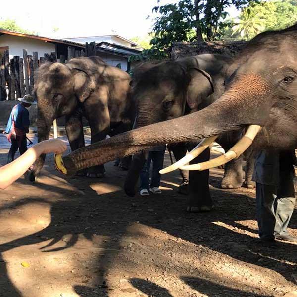 one-day-trip-family-adventure-the-nature-safari-tour-chiang-mai-thailand-7