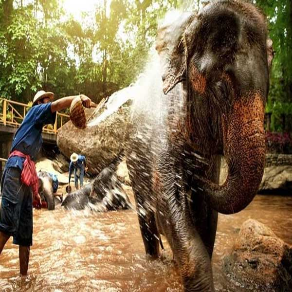 one-day-trip-family-adventure-the-nature-safari-tour-chiang-mai-thailand-9