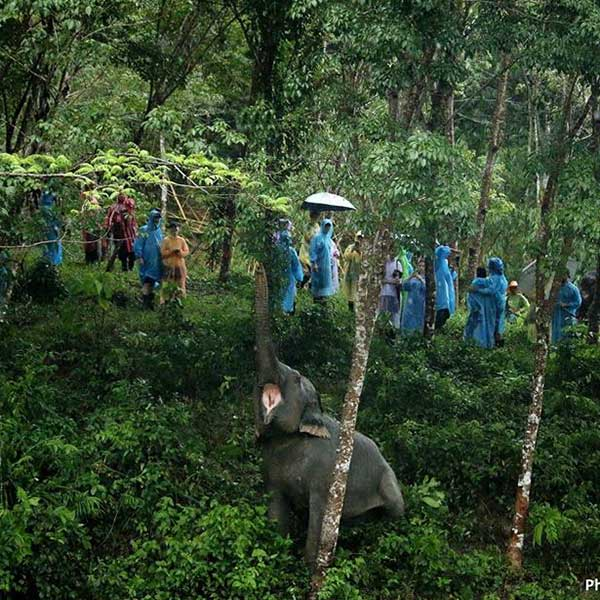 half-day-morning-education-with-the-elephants-jungle-phuket-sanctuary-12