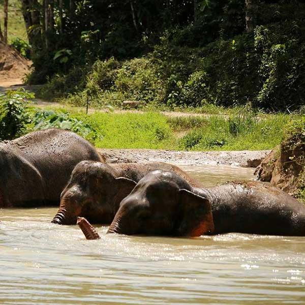 half-day-morning-education-with-the-elephants-jungle-phuket-sanctuary-4