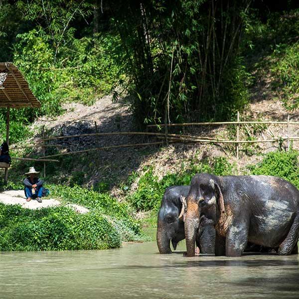 half-day-morning-education-with-the-elephants-jungle-phuket-sanctuary-8