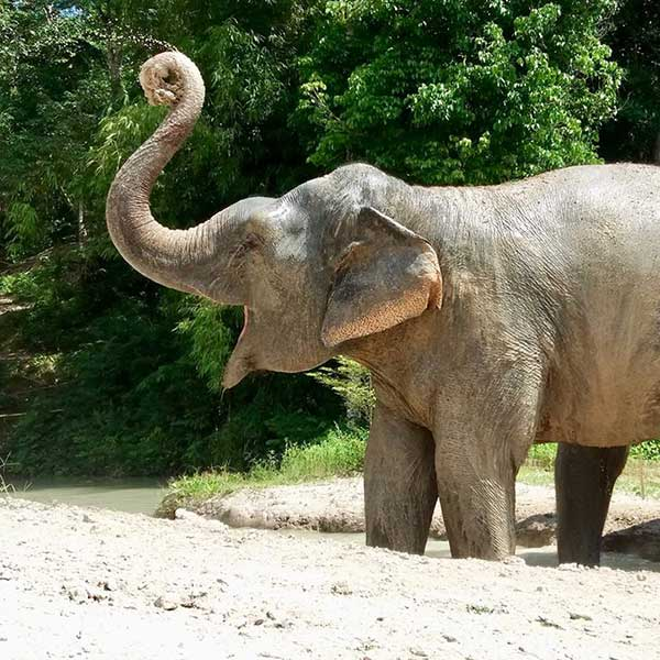 half-day-morning-education-with-the-elephants-jungle-phuket-sanctuary-9
