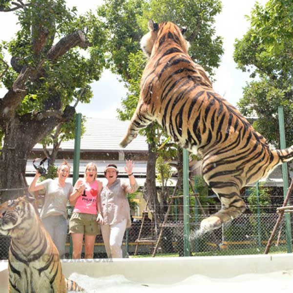 play-animal-take-picture-touch-with-tigers-kingdom-phuket