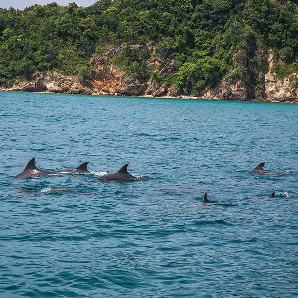 one-day-trip-phiphi-maya-maiton-island-sunset-cruise-power-catamaran-phuket-3