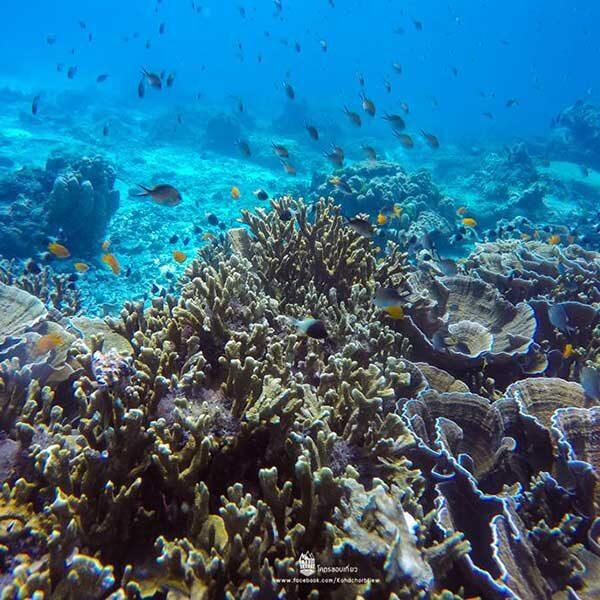 full-day-trip-racha-noi-racha-yai-maiton-island-by-catamaran