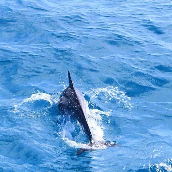 phuket-full-day-trip-racha-noi-racha-yai-maiton-island-by-catamaran-9