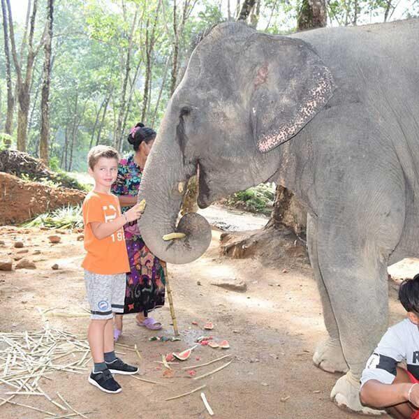 tour-thing-to-do-elephant-jungle-sanctuary-phuket-10