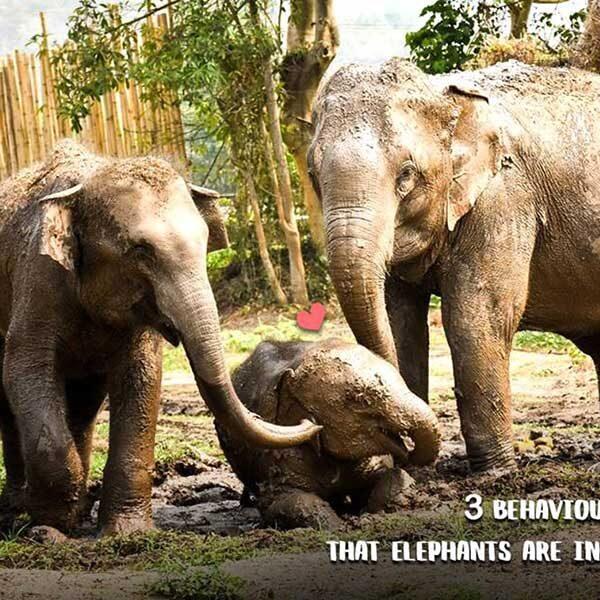 tour-thing-to-do-elephant-jungle-sanctuary-phuket-2