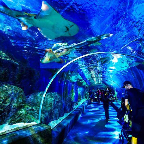 Book-Ticket-Sea-Life-Ocean-World-Bangkok-6