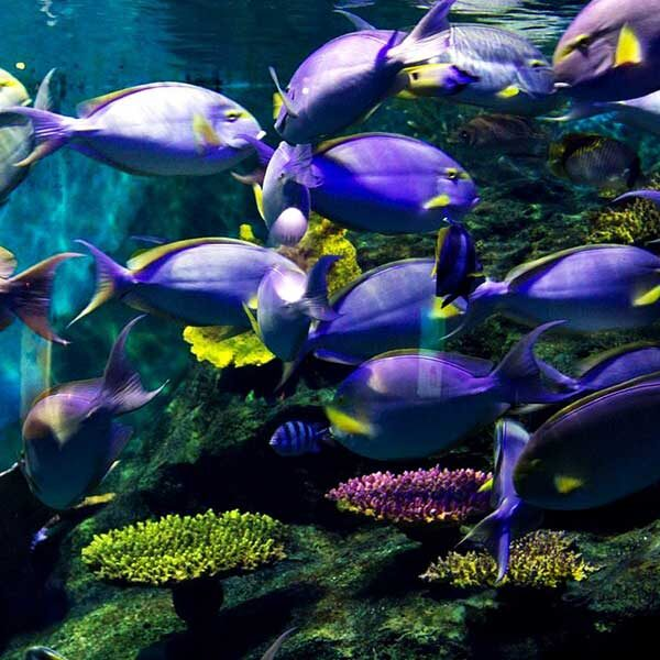 Book-Ticket-Sea-Life-Ocean-World-Bangkok-7