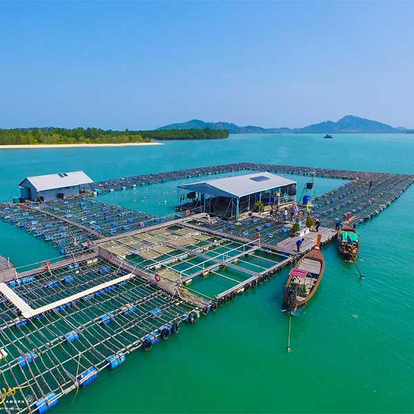 Half-Day-Tour-Phuket-Pearl-Farm-Trip