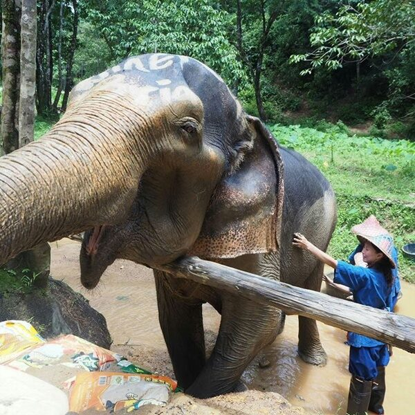 Phuket Best Trip Elephant Care