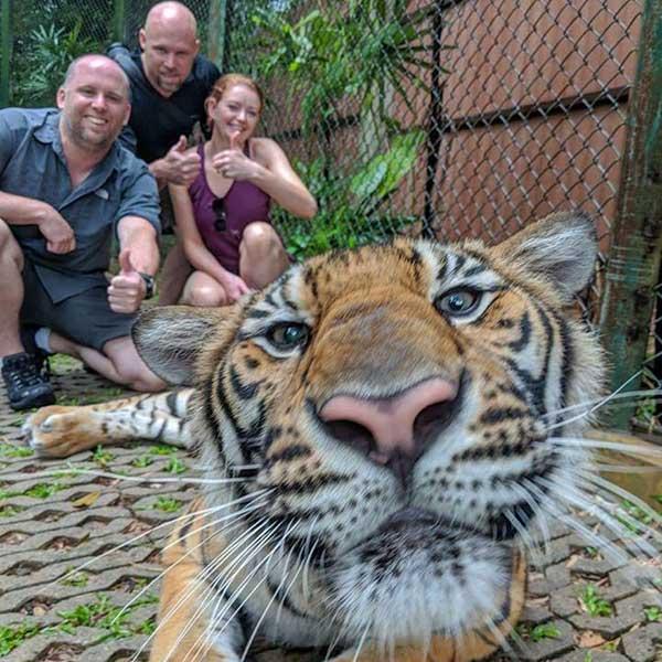 Small-Tiger-Kingdom-Phuket
