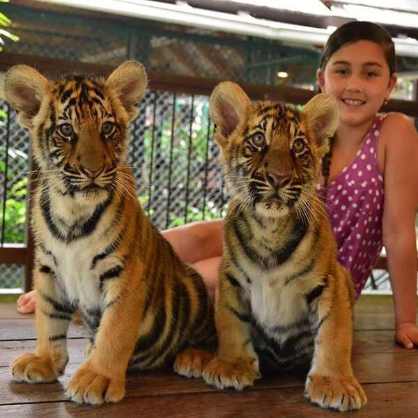 Smallest-Tiger-Kingdom-Phuket-2