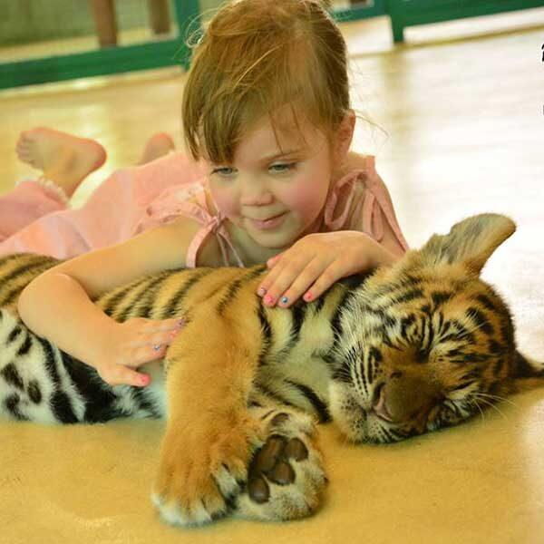 Smallest-Tiger-Kingdom-Phuket-5
