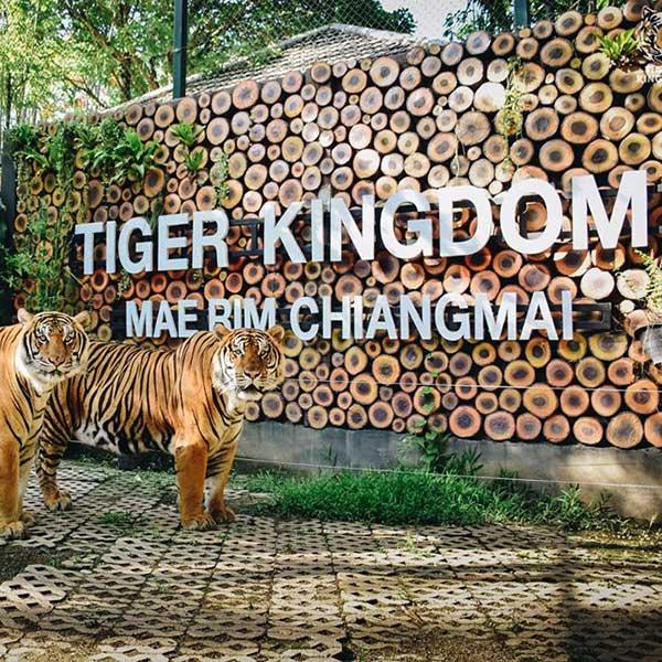 tiger-kingdom-mae-rim-chiang-mai-zoo