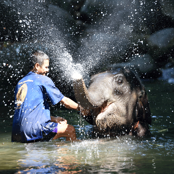 phuket-phang-nga-full-day-learning-elephant-care-11