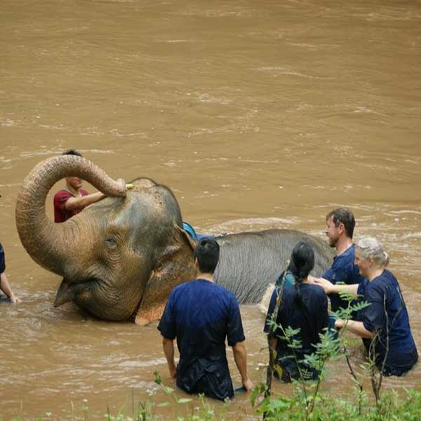 wwr-1-full-day-white-water-rafting-mae-taeng-elephant-care-river-chiang-mai-thailand-tours-4