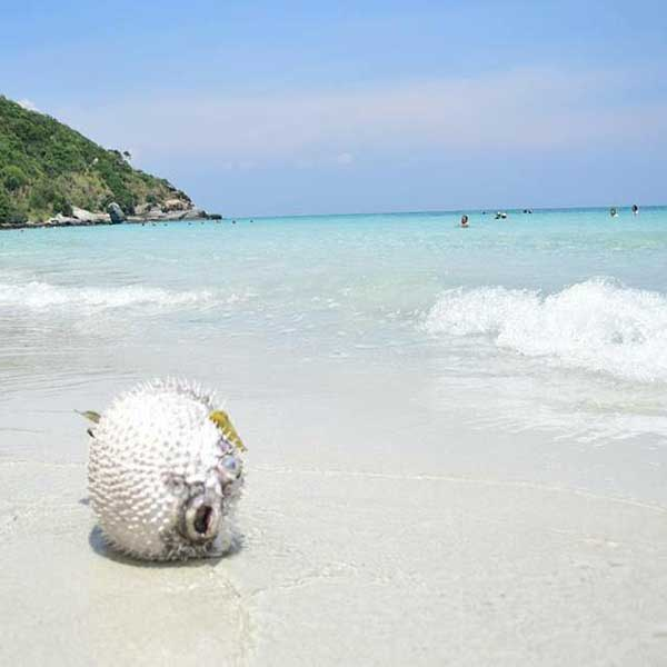 island-trips-koh-pai-koh-rin-kho-man-koh-ped-pattaya-tours-package-3