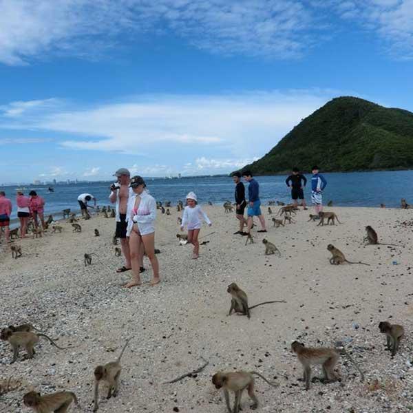 island-trips-koh-pai-koh-rin-kho-man-koh-ped-pattaya-tours-package-8