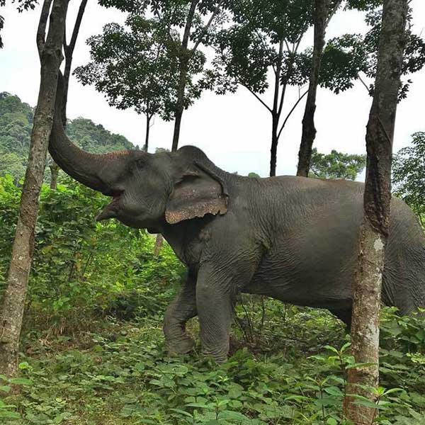 half-day-morning-education-with-the-elephants-jungle-phuket-sanctuary-5