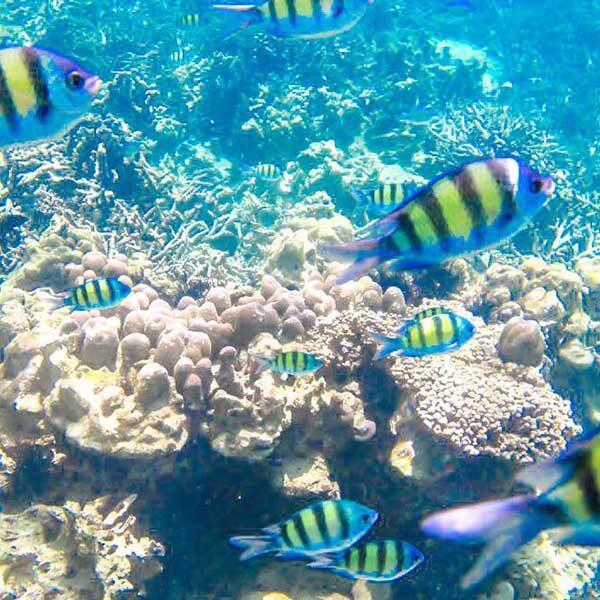 Phuket-Full-day-trip-Raya-Island-Coral-Island-by-speedboat-4