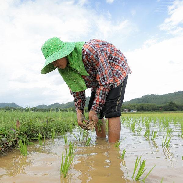 local-thai-farm-tour-yao-noi-island-phuket