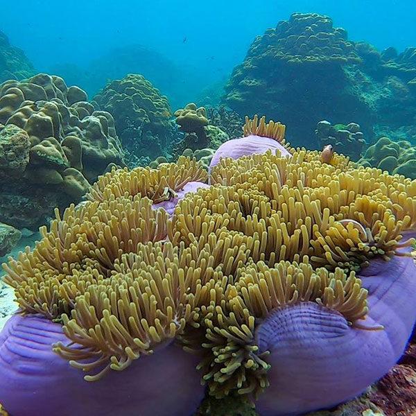 snorkeling-rok-island-tour-phuket