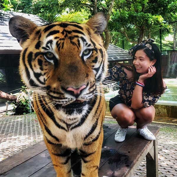 Book-Ticket-Tiger-Kingdom-Phuket