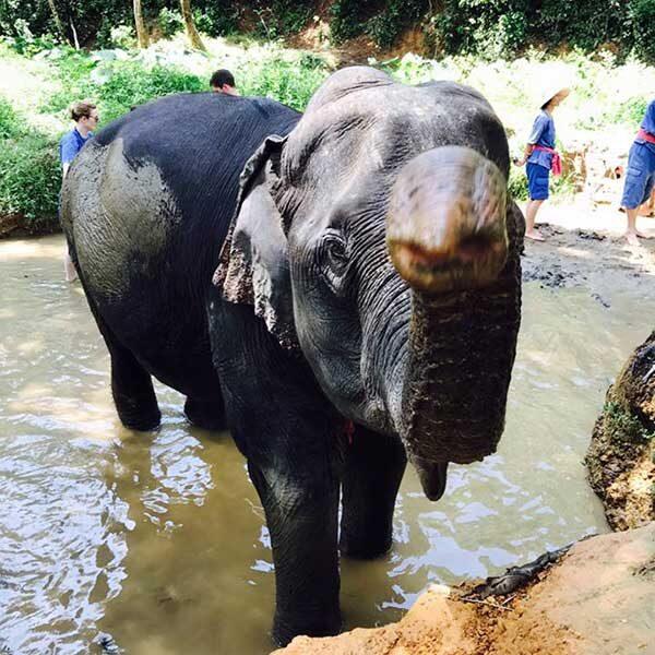Full-Day-Elephant-Sanctuary-Phuket-Phang-Nga-3