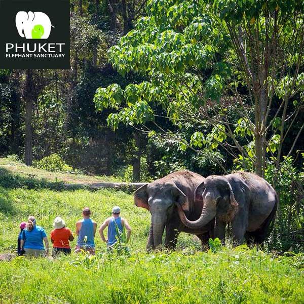 Phuket-Elephant-Sanctuary-Paklok-Thalang-2