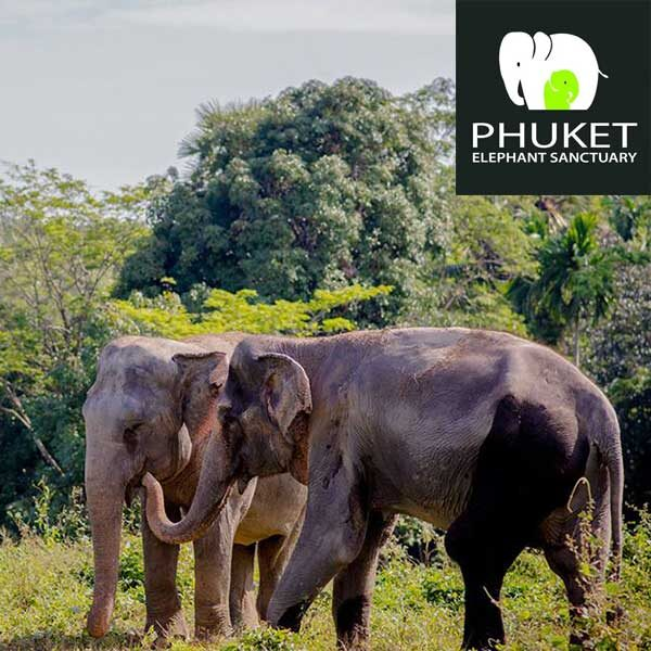 Phuket-Elephant-Sanctuary-Paklok-Thalang