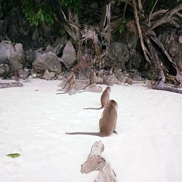 monkey-beach-phi-phi-island