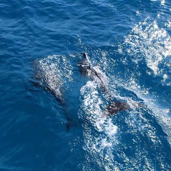 phuket-full-day-trip-racha-noi-racha-yai-maiton-island-by-catamaran-8
