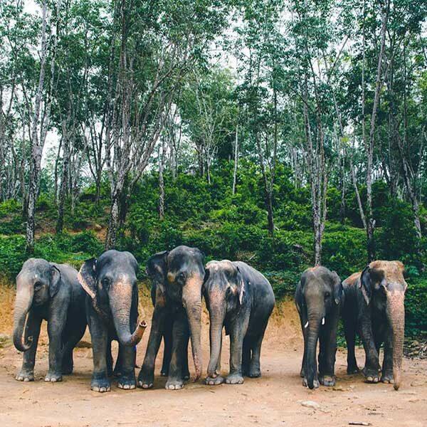 tour-thing-to-do-elephant-jungle-sanctuary-phuket-6