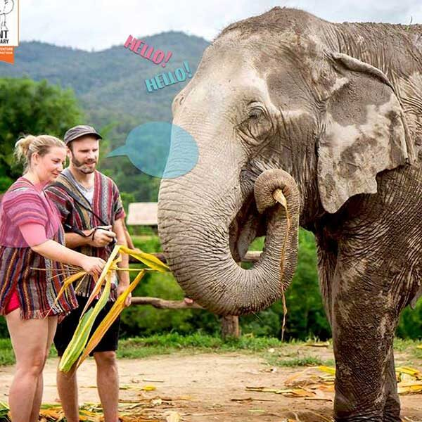 tour-thing-to-do-elephant-jungle-sanctuary-phuket