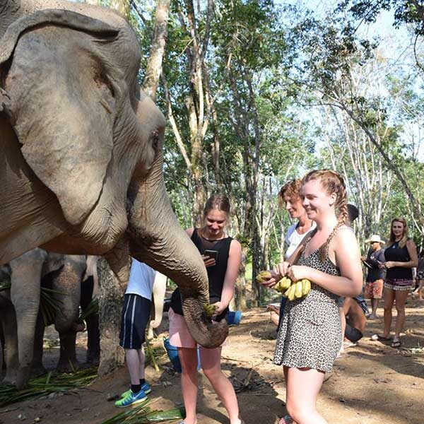 tour-thing-to-do-elephant-jungle-sanctuary-phuket-7