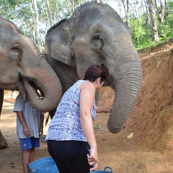 tour-thing-to-do-elephant-jungle-sanctuary-phuket-8