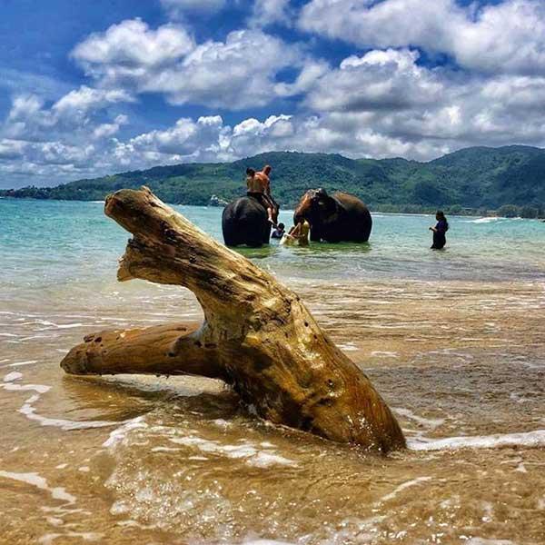 Swim-Shower-With-Elephant-On-The-Beach-Phuket-3