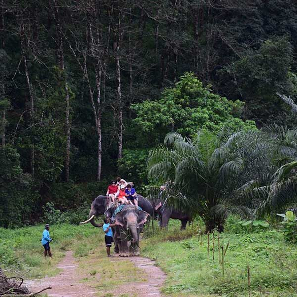 A.-Day-Trip-White-Water-Rafting-Elephant-Trekking-Flying-Fox-4