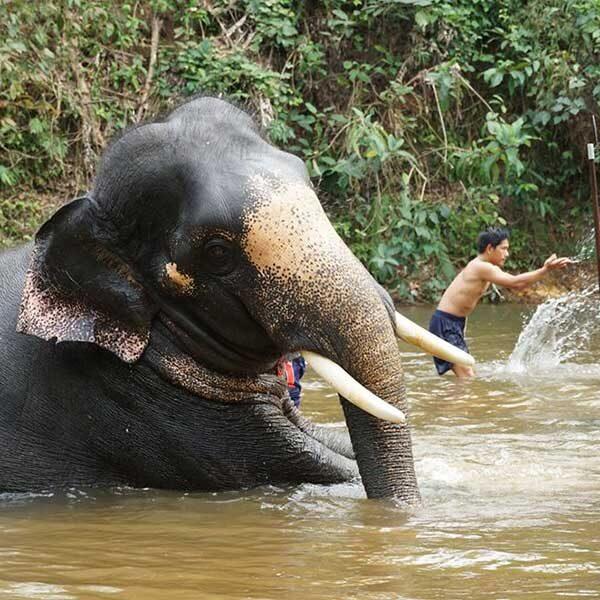 F.-Day-Trip-Rafting-Flying-Fox-Elephant-Trekking-Bathing-ATV-2